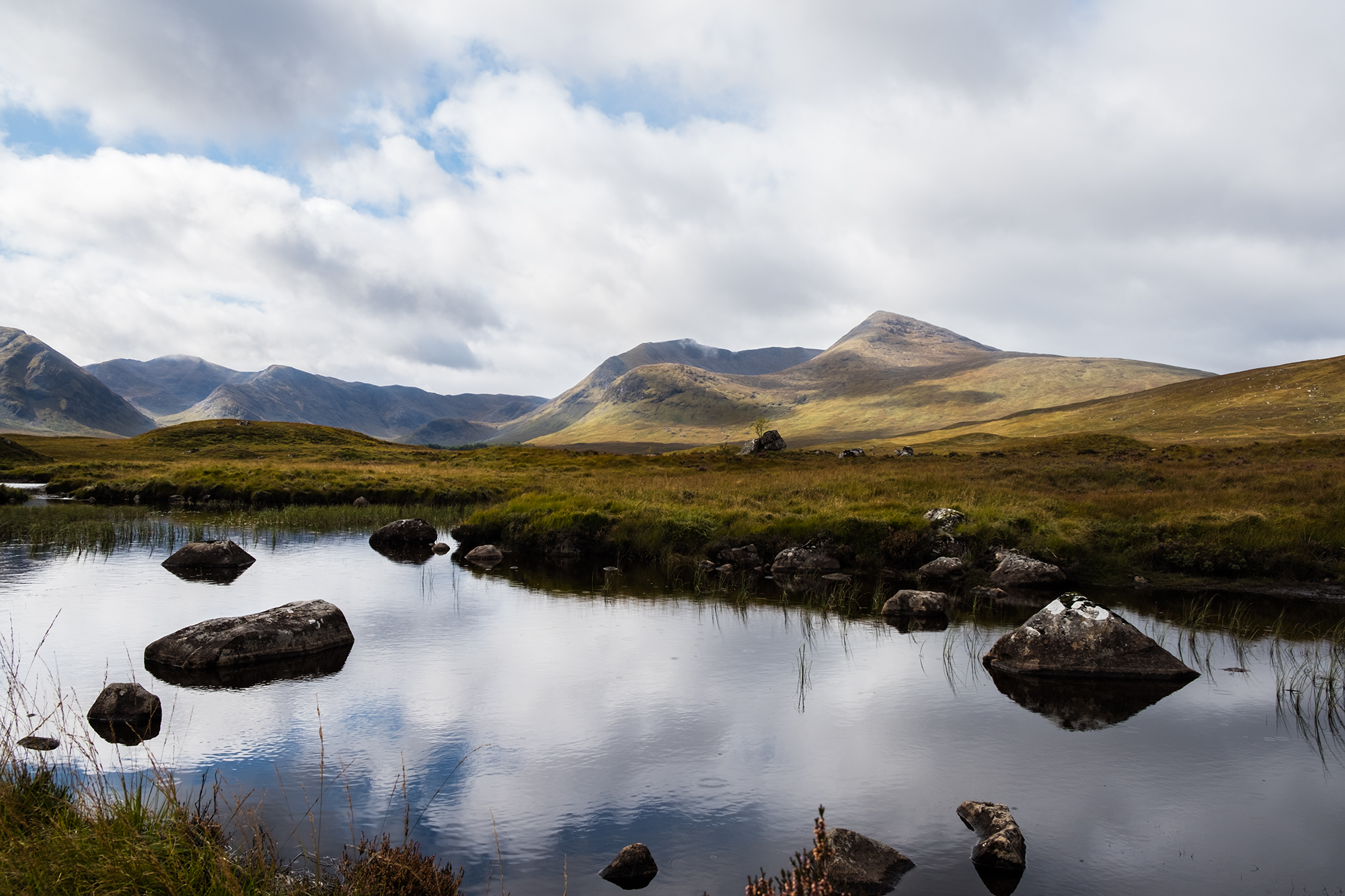 Loch narrow-leaved: landing and care 64